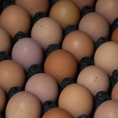 Fresh organic eggs from the farm